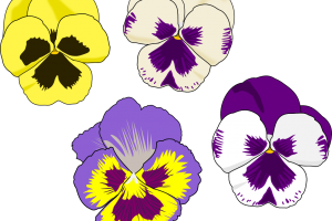 pansy flower clipart 1
