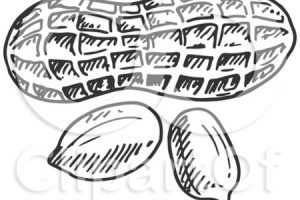 peanut clipart black and white 5