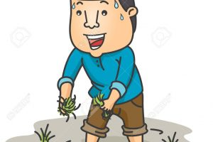 rice farmer clipart 1