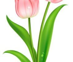 tulips clipart 1