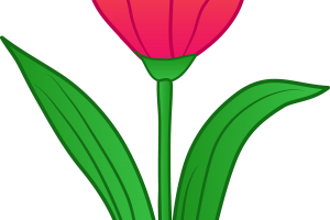 tulips clipart 2