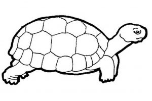 turtle clipart black and white 4