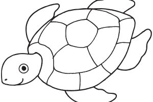 turtle clipart black and white 5
