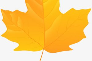 yellow leaf clipart 1