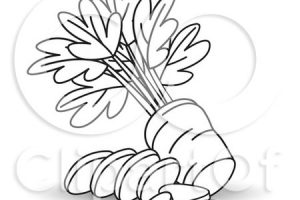 outline carrot clipart black and white 7
